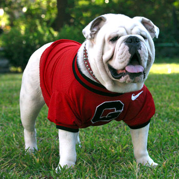 What Is The Name Of The Uga Dog